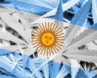 bandera-de-argentina-en-el-fondo-de-cannabis-la-pol-tica-de-drogas-la-legalizaci-n-de-la-marihuana-foto-de-archivo