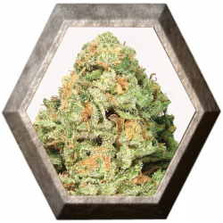 Fruit Punch 3 semillas HeavyWeight Seeds HEAVYWEIGHT SEEDS HEAVYWEIGHT SEEDS