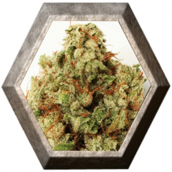 Green Ninja 3 semillas HeavyWeight Seeds HEAVYWEIGHT SEEDS HEAVYWEIGHT SEEDS