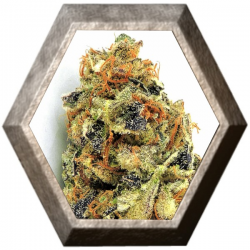 KO Kush 3 semillas HeavyWeight Seeds HEAVYWEIGHT SEEDS HEAVYWEIGHT SEEDS