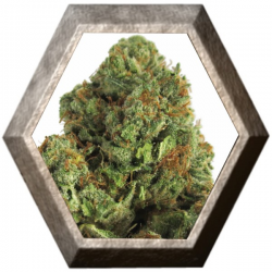 Midnight Mass 3 semillas HeavyWeight Seeds HEAVYWEIGHT SEEDS HEAVYWEIGHT SEEDS