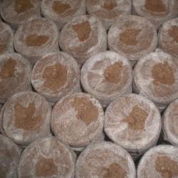 Caja Pastillas Jiffy Turba 24mm 2000uni