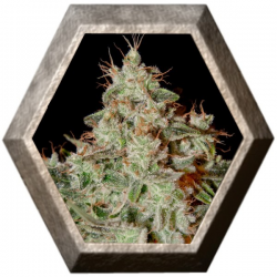 Lemon Skunk 1 semilla Green House Seeds