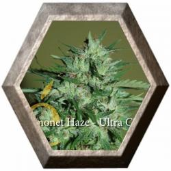 Llimonet Haze ultra CBD 3 semillas Elite Seeds ELITE SEEDS ELITE SEEDS