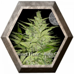 Llimonet Haze Auto CBD 3 semillas Elite Seeds ELITE SEEDS ELITE SEEDS