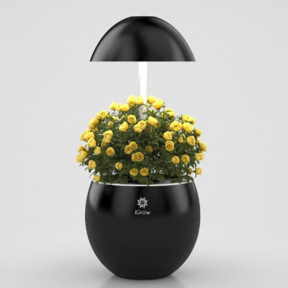 Urbangreen I-Grow 3 Negro