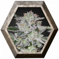 Sweet Valley Kush 3 semillas Green House Seeds