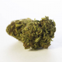 Flores CBD Harley Queen GreenHouse 1gr Sweed Dreams