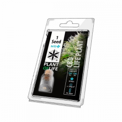 CBD Life Plant Medical Auto 1 semilla Plant Of Life Seeds  PLANT OF LIFE SEEDS