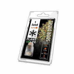 Sour Diesel Auto 1 semilla Plant Of Life Seeds  PLANT OF LIFE SEEDS