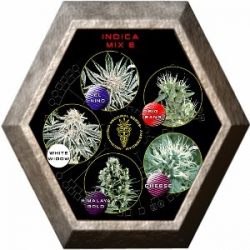 Indica Mix E 5 semillas Green House Seeds