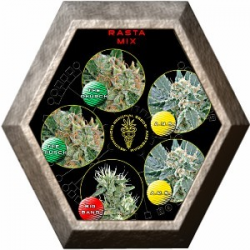 Rasta Mix 5 semillas Green House Seeds