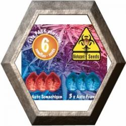 Auto Pack -1- 6 semillas Biohazard Seeds BIOHAZARD SEEDS BIOHAZARD SEEDS