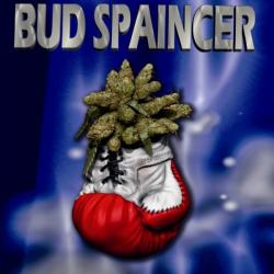 Bud Spaincer 1 semilla Sativagrow SATIVAGROW SATIVAGROW