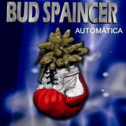 Bud Spaincer Auto 1 semilla Sativagrow SATIVAGROW SATIVAGROW